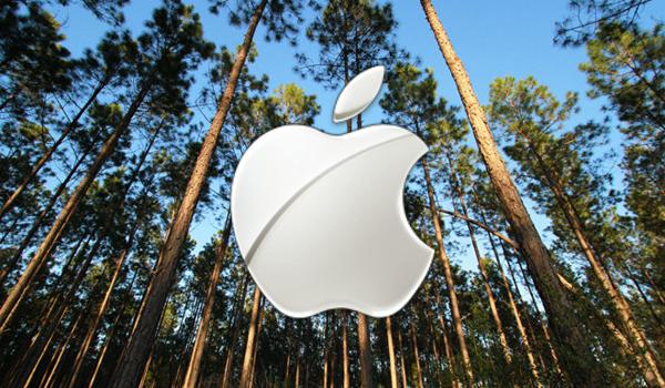 Лес пойдет на создание упаковки продуктов Apple